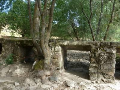 Cañones del Río Cega y  Santa Águeda  – Pedraza;madrid joven taxus bacatta